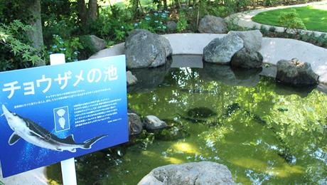 17.07.04_チョウザメの池