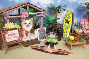 「ハワイ・わんわんビーチ」